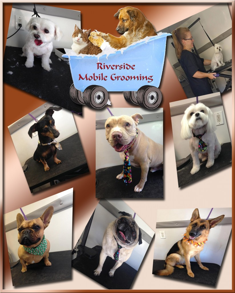 riverside_mobile_pet_grooming