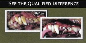 dental3